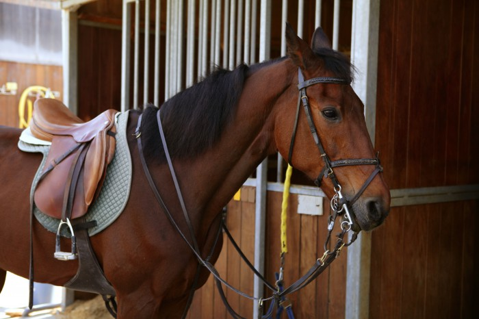 Why not buy a used saddle instead of a new one ?